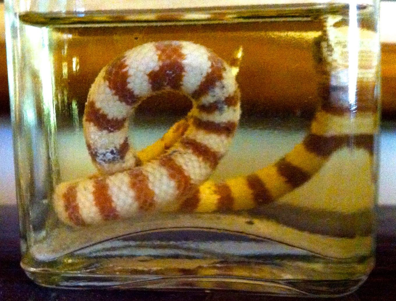 snakes in bottles