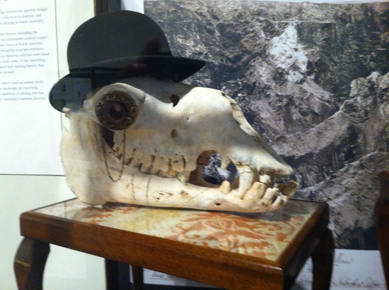 cow skull?