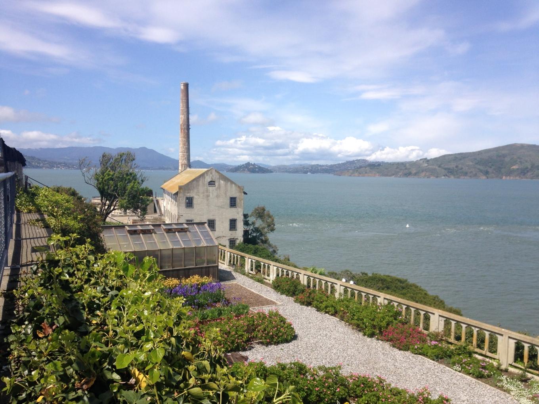 Alcatraz native plants regeneration